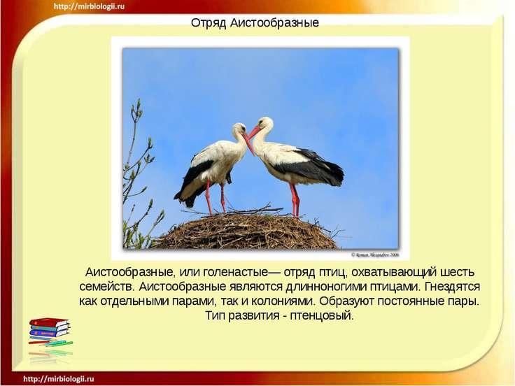 Отряд Аистообразные Аистообразные, или голенастые— отряд птиц, охватывающий ш...
