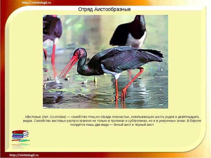 Отряд Аистообразные А истовые (лат. Ciconiidae) — семейство птиц из отряда го...