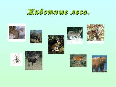 Животные леса.