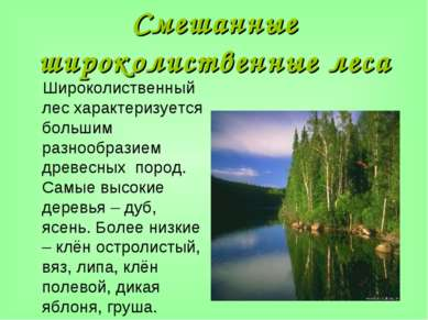 Смешанные широколиственные леса Широколиственный лес характеризуется большим ...
