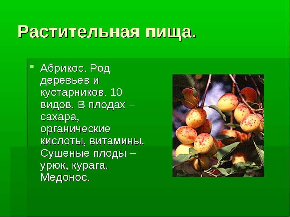 Растительная пища. Абрикос. Род деревьев и кустарников. 10 видов. В плодах –с...