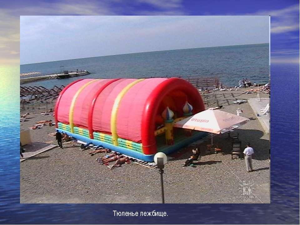 Тюленье лежбище.