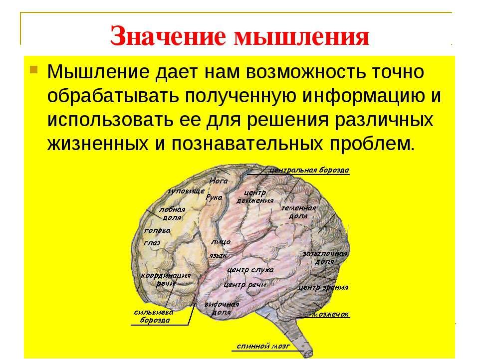 Значение мышления Мышление дает нам возможность точно обрабатывать полученную...