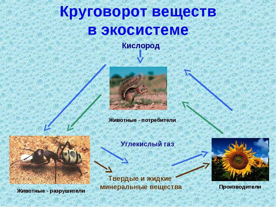 Круговорот веществ в экосистеме Углекислый газ Твердые и жидкие минеральные в...