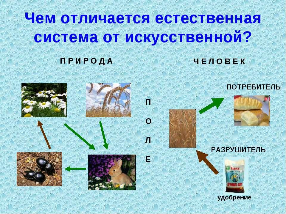 Чем отличается естественная система от искусственной? Ч Е Л О В Е К П Р И Р О...