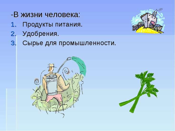-В жизни человека: Продукты питания. Удобрения. Сырье для промышленности.