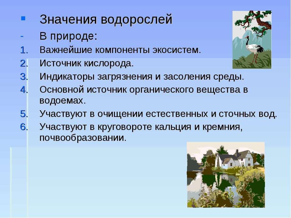 Значения водорослей В природе: Важнейшие компоненты экосистем. Источник кисло...