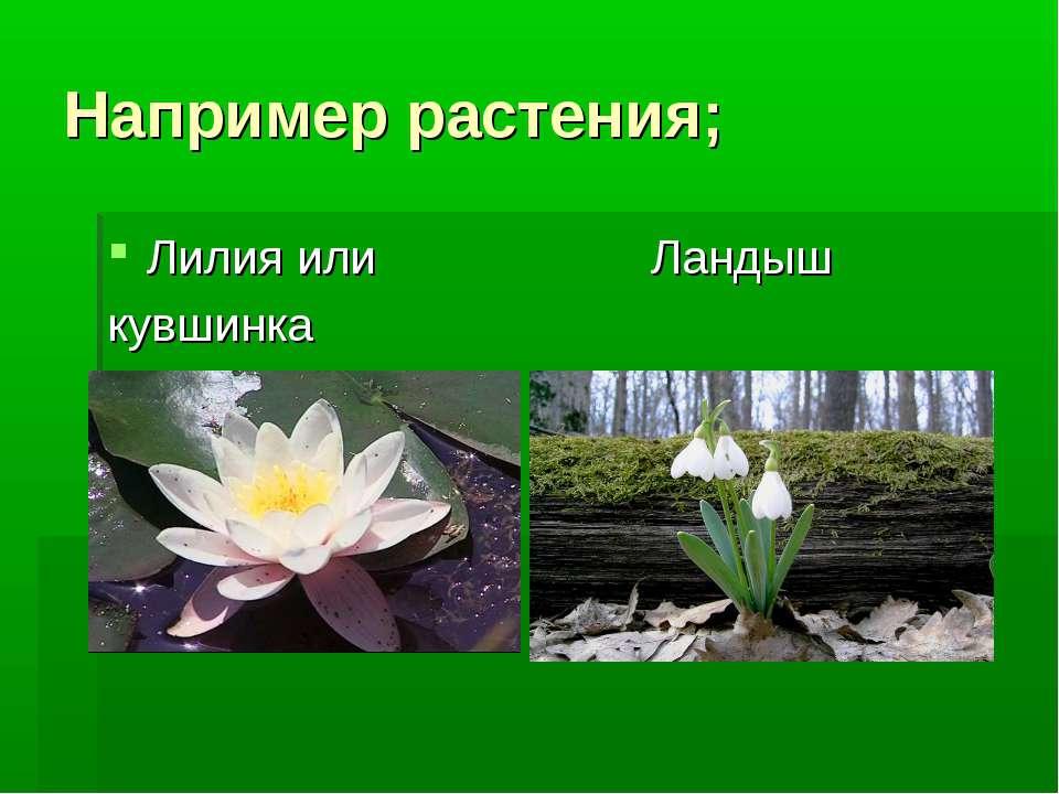 Например растения; Лилия или Ландыш кувшинка