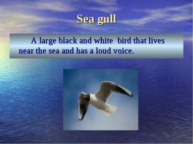Sea gull A large black and white bird that lives near the sea and has a loud ...