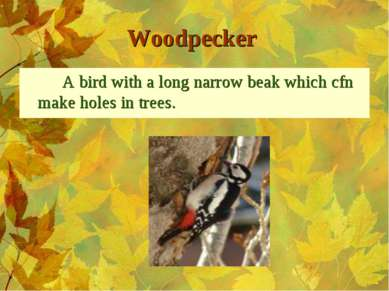 Woodpecker A bird with a long narrow beak which cfn make holes in trees.