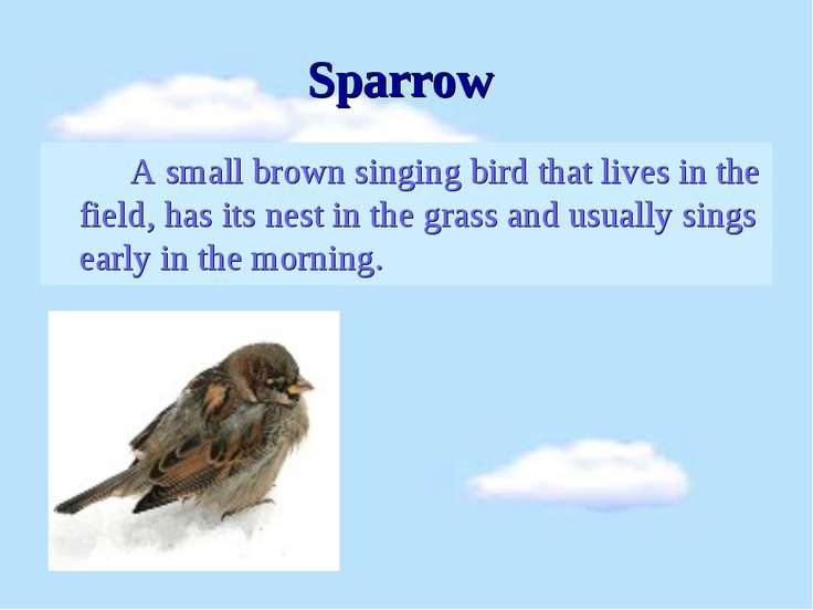 Sparrow A small brown singing bird that lives in the field, has its nest in t...