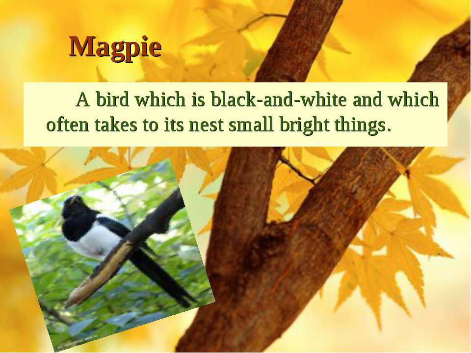 Magpie A bird which is black-and-white and which often takes to its nest smal...