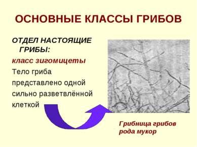 ОСНОВНЫЕ КЛАССЫ ГРИБОВ ОТДЕЛ НАСТОЯЩИЕ ГРИБЫ: класс зигомицеты Тело гриба пре...