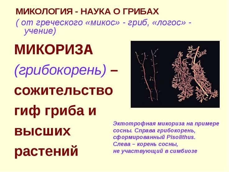 МИКОЛОГИЯ - НАУКА О ГРИБАХ ( от греческого «микос» - гриб, «логос» - учение) ...