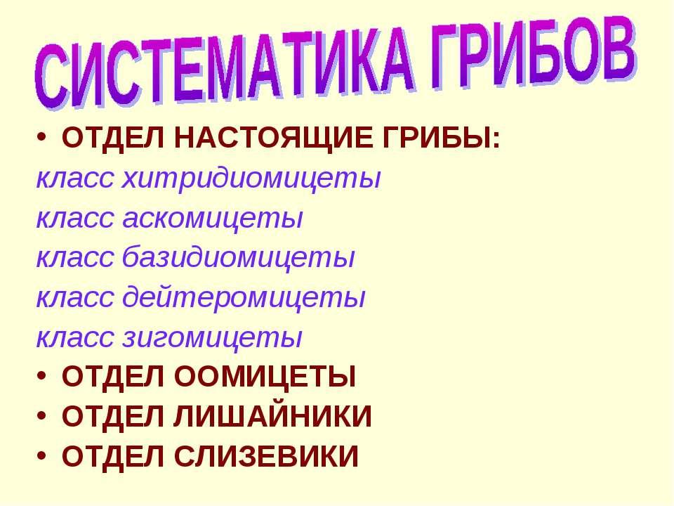 ОТДЕЛ НАСТОЯЩИЕ ГРИБЫ: класс хитридиомицеты класс аскомицеты класс базидиомиц...