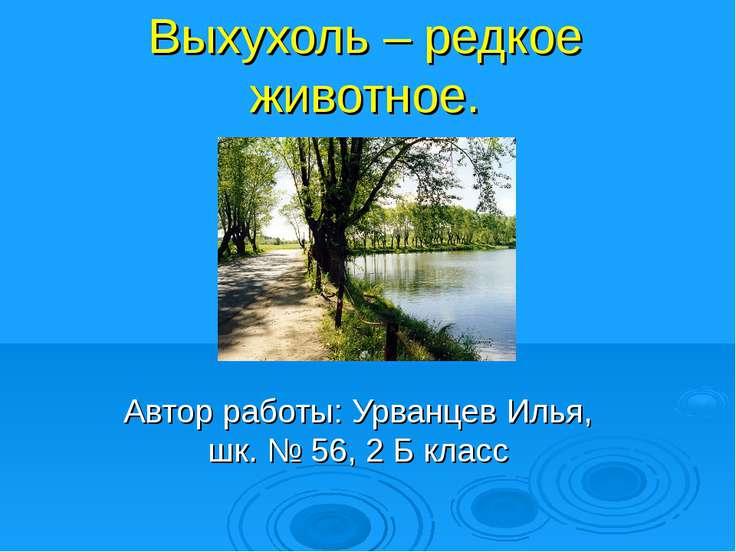 Выхухоль – редкое животное. Автор работы: Урванцев Илья, шк. № 56, 2 Б класс