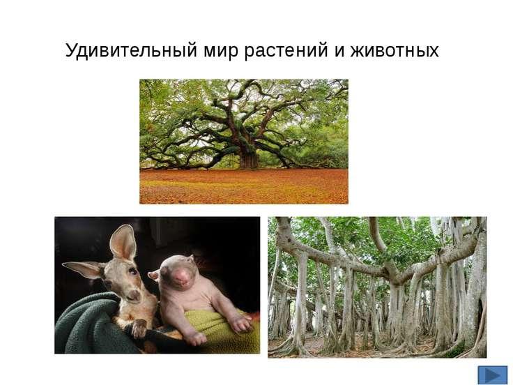 Удивительный мир растений и животных