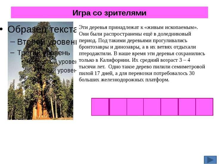 Игра со зрителями Эти деревья принадлежат к «живым ископаемым». Они были расп...