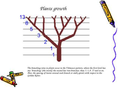 Plants growth The branching rates in plants occur in the Fibonacci pattern, w...
