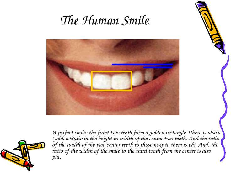The Human Smile A perfect smile: the front two teeth form a golden rectangle....