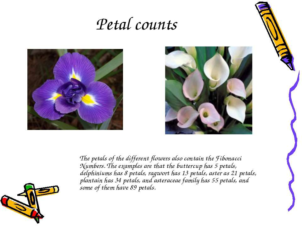 Petal counts   The petals of the different flowers also contain the Fibonacci...