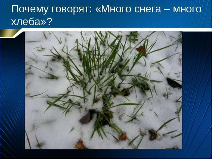 Почему говорят: «Много снега – много хлеба»?