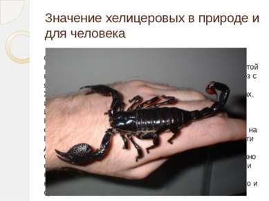 Значение хелицеровых в природе и для человека Скорпионы ядовиты, яд накаплива...