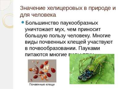 Значение хелицеровых в природе и для человека Большинство паукообразных уничт...
