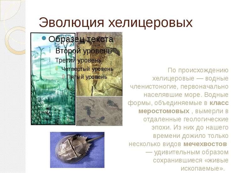 Эволюция хелицеровых По происхождению хелицеровые — водные членистоногие, пер...