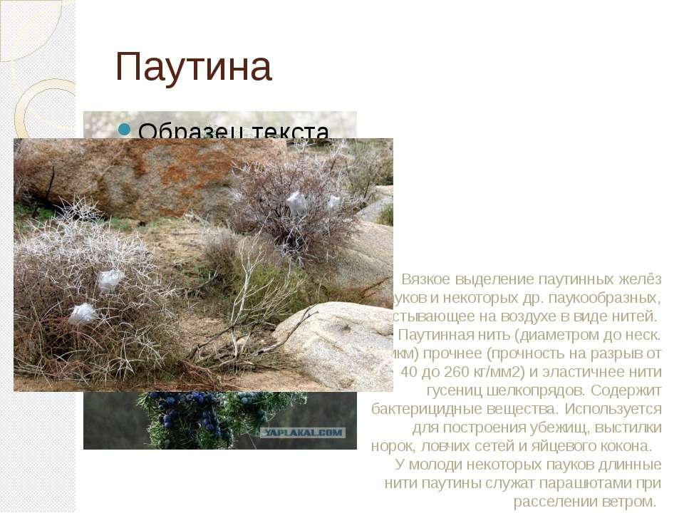 Паутина Вязкое выделение паутинных желёз пауков и некоторых др. паукообразных...