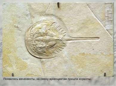 Появились мечехвосты, на смену археоциатам пришли кораллы.