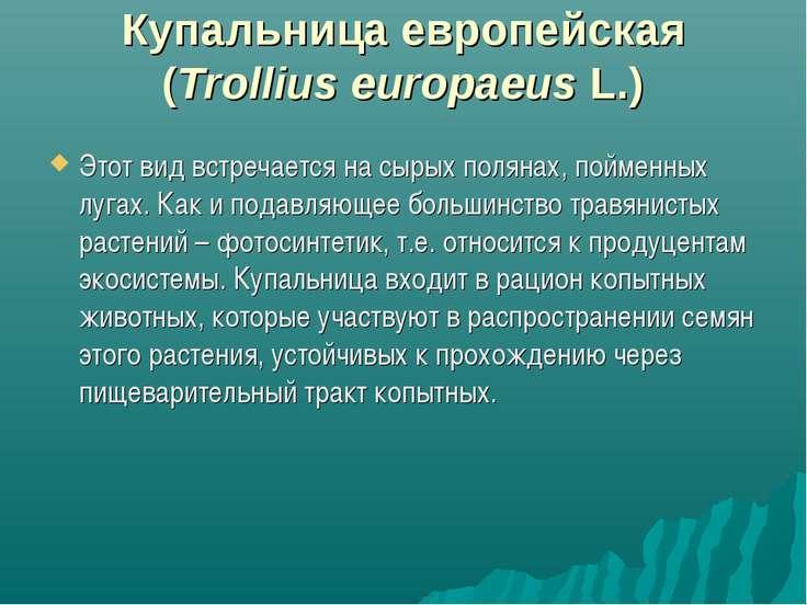 Купальница европейская (Trollius europaeus L.) Этот вид встречается на сырых ...