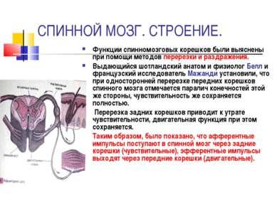 СПИННОЙ МОЗГ. СТРОЕНИЕ. Функции спинномозговых корешков были выяснены при пом...