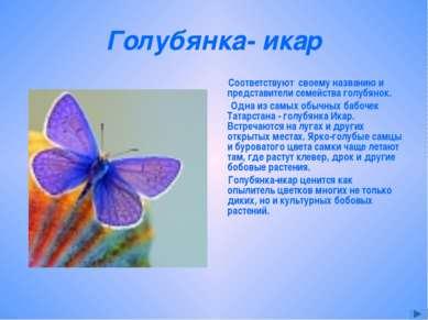 Голубянка- икар Соответствуют своему названию и представители семейства голуб...