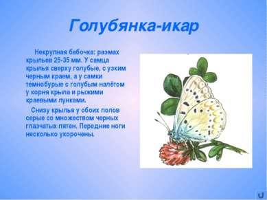 Голубянка-икар Некрупная бабочка: размах крыльев 25-35 мм. У самца крылья све...