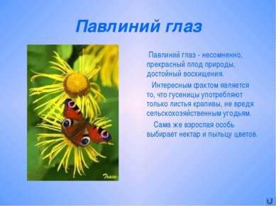 Павлиний глаз Павлиний глаз - несомненно, прекрасный плод природы, достойный ...