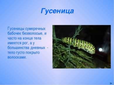 Гусеница Гусеницы сумеречных бабочек безволосые, и часто на конце тела имеетс...