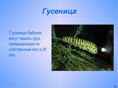 Гусеница Гусеницы бабочек могут тащить груз, превышающий их собственный вес в...