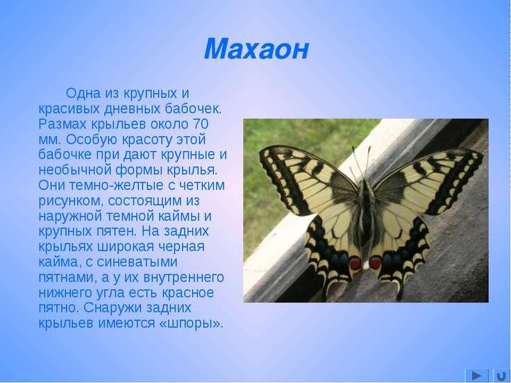 Махаон Одна из крупных и красивых дневных бабочек. Размах крыльев около 70 мм...