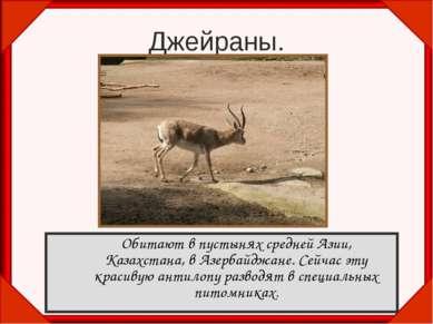 Джейраны. Обитают в пустынях средней Азии, Казахстана, в Азербайджане. Сейчас...