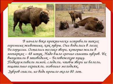 В начале века практически истребили таких огромных животных, как зубры. Они в...