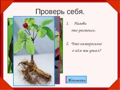 Проверь себя. Назови это растение. 2. Что интересного о нём ты узнал? Венерин...