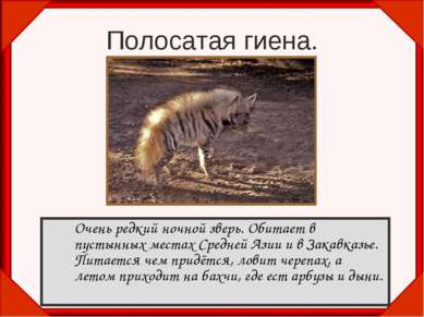 Полосатая гиена. Очень редкий ночной зверь. Обитает в пустынных местах Средне...