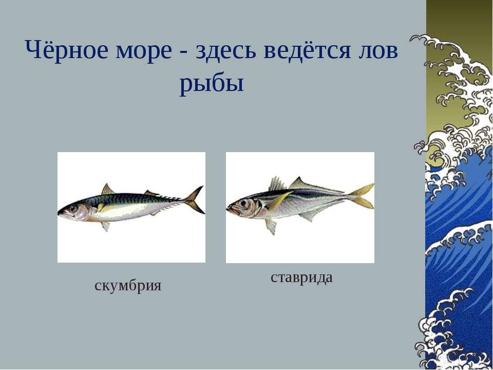 Чёрное море - здесь ведётся лов рыбы скумбрия ставрида