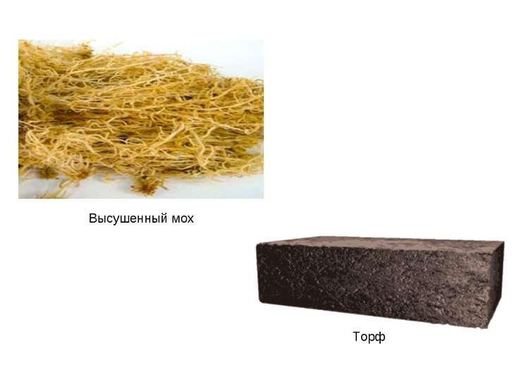 Высушенный мох Торф