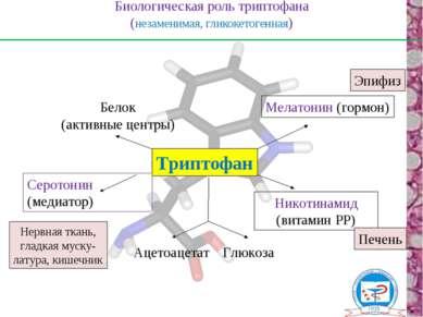 Биологическая роль триптофана (незаменимая, гликокетогенная) Триптофан Серото...