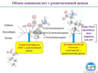 Обмен аминокислот с разветвленной цепью Лейцин Изолейцин Валин α-Кетоизокапро...