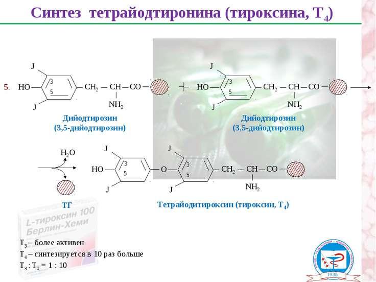 Синтез тетрайодтиронина (тироксина, Т4) Дийодтирозин (3,5-дийодтирозин) 3 5 Д...