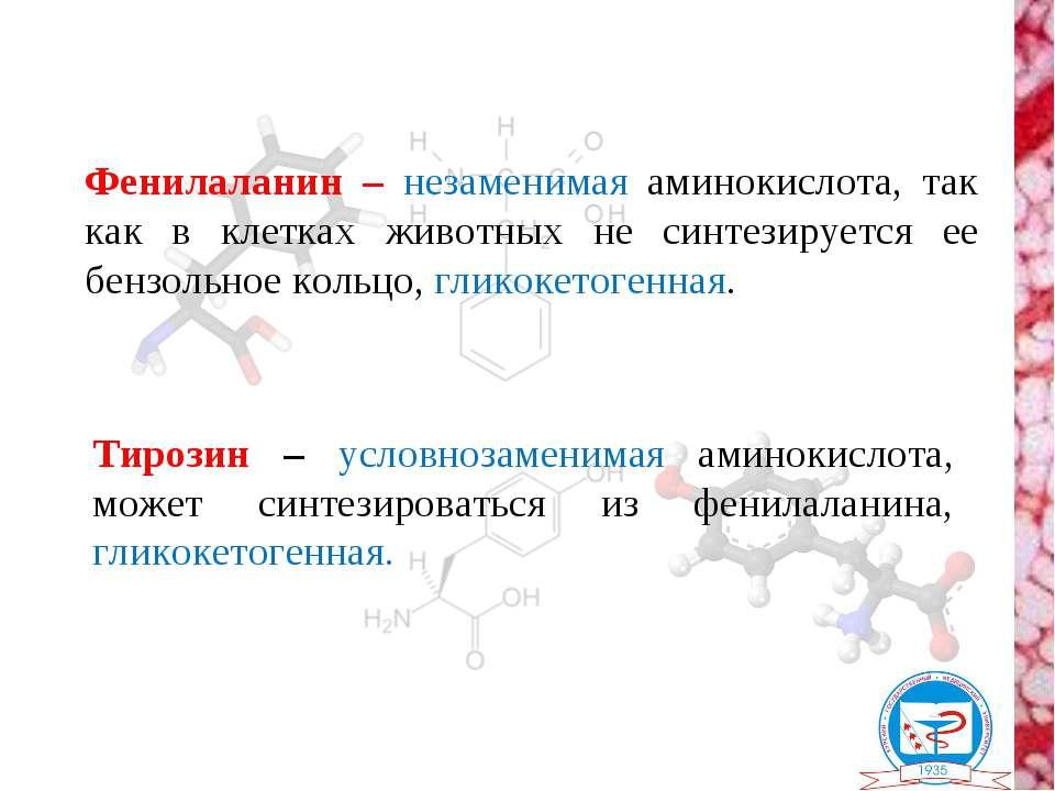 Фенилаланин – незаменимая аминокислота, так как в клетках животных не синтези...