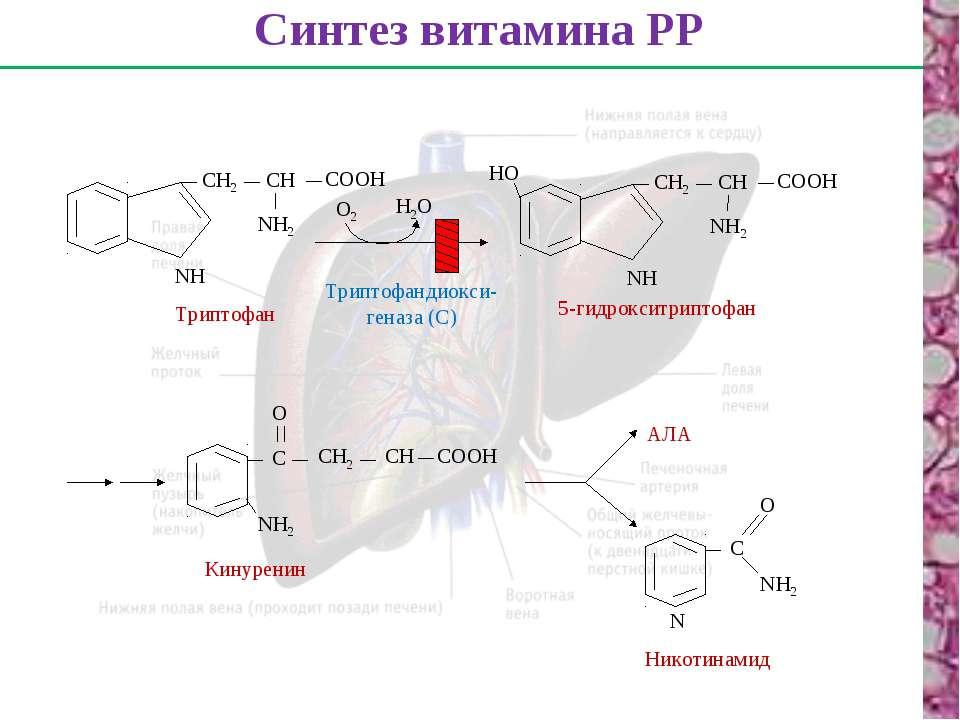 Синтез витамина РР Триптофан NН СН2 СН СООН NН2 О2 Н2О NН СН2 СН СООН NН2 НО ...